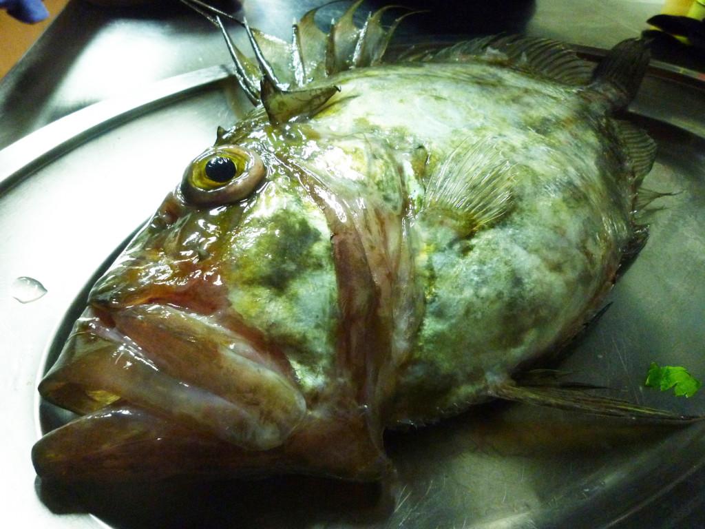 cormorano_pesce_2